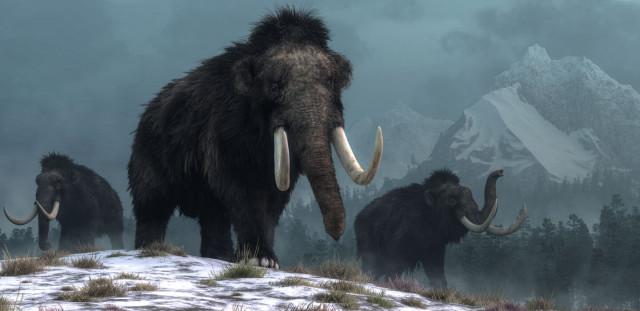 Climate Change – Species Extinction or Explosion?